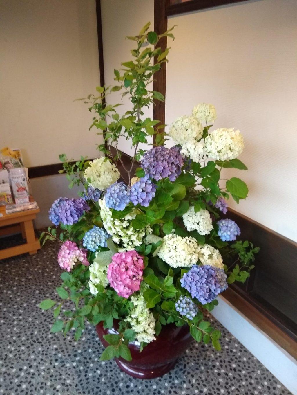 水揚げ 紫陽花